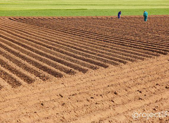 La valorizzazione economica dei terreni marginali nelle aziende agricole.